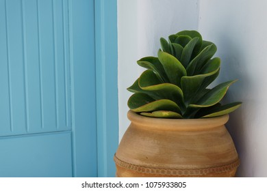 Decorative Echeveria pot in front of a door house in Skyros island, Greece