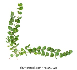 Decorative eucalyptus leaves corner arrangement isolated on white.