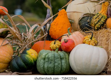 Decorative fall display of pumpkins and squash fresh from the farmers fields.