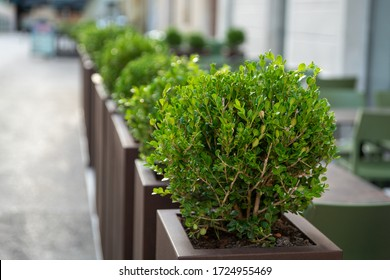 Decorative fence of a summer cafe made of containers with plants. Selective focus.