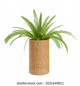 Decorative fern plant planted in rattan pot, isolated on white background. 3D Rendering, Illustration.