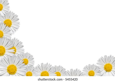 Decorative floral corner with daisy on white background