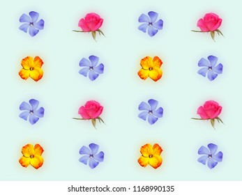 Decorative floral pattern with pink roses, yellow red flower of wallflower and blue flower of periwinkle on light green background