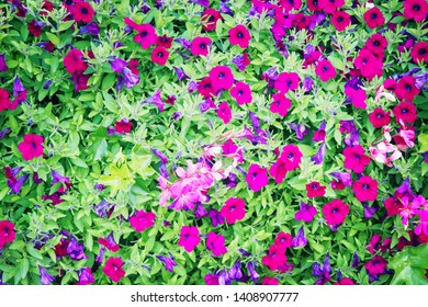 Decorative floriculture. Flowers on city beds Dijon, France, city decorations