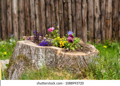 Decorative flower bed with flowers on the stump in the garden, close up