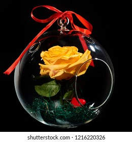 decorative flower preserved (eternal roses) in the globe of glass isolated on black