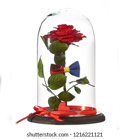 decorative flower preserved (eternal roses) in the globe of glass isolated on white