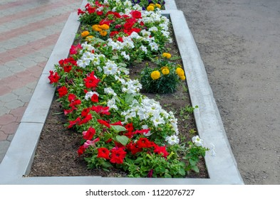 Decorative flowerbed with many colors of several colors.