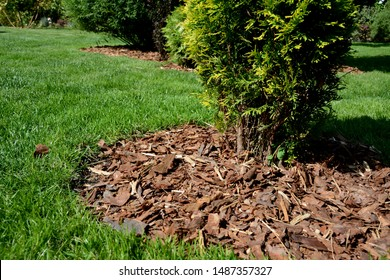Pine Mulch Images Stock Photos Vectors Shutterstock