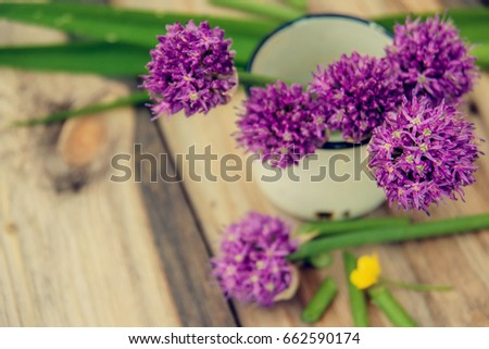 Decorative Flowering Edible Onion Garden Allium Stock Photo Edit