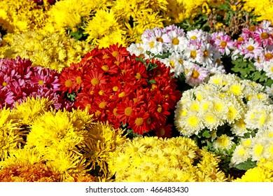 Decorative flowers in the garden