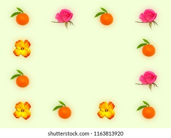 Decorative frame with pink roses, orange tangerines and yellow red flower of wallflower on light green background
