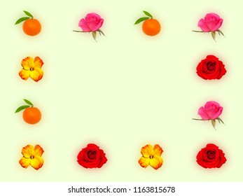 Decorative frame with pink roses, red roses, orange tangerines and yellow red flower of wallflower on light green background