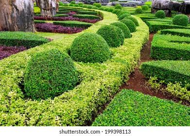 Decorative garden into shape.