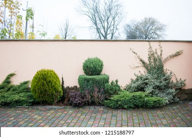 Decorative garden trees