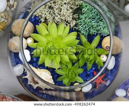 Decorative Glass Vase Succulent Plants Seashells Glass Stock Photo