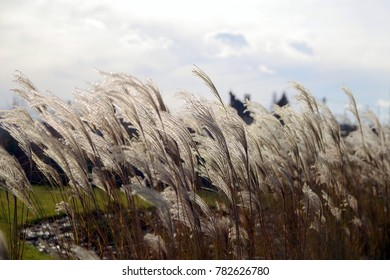 decorative grass against the sky