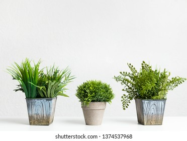 Decorative grassy houseplants against grey wall with empty space