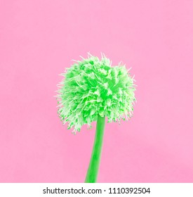 Decorative green flower onion on pink background. Fashion minimal style. Concept art.