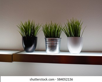 Decorative green grass house plants in pots on a wooden shelf