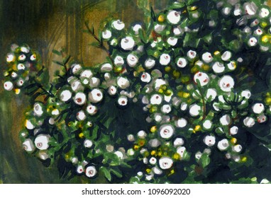 Decorative green plant with white berries on dark background. Gaultheria mucronata or prickly heath evergreen shrub. Card template