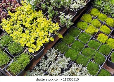 Decorative green plants and seedlings nursery garden