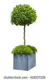 Decorative green tree in grey pot isolated on white background.