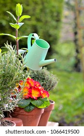 decorative green watering can in flowers and aromatic plants potted in a garden
