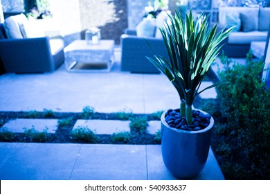 Decorative House Plant with Sofa and Table in Backyard