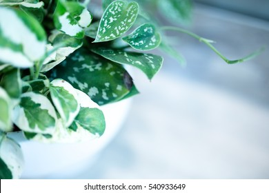 Decorative House Plants