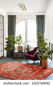 Decorative houseplants in the living room in the style of boho or loft. Modern stylish interior of the house with plants in pots.