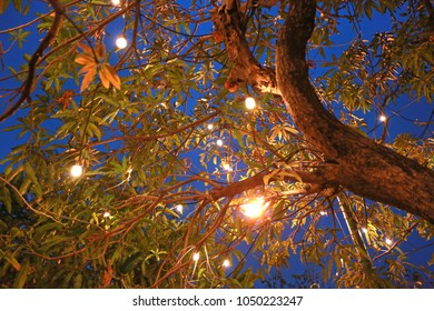 Decorative light bulb hanging on tree in the garden at night.