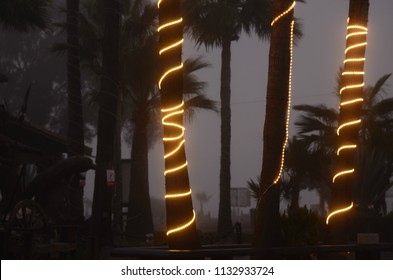 decorative light strings wrapped around palm tree trunks on foggy night Baja, Mexico