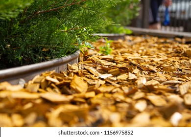 Decorative mulch, mulching, bark with an alement of the flower bed. Wood chips. Natural pine mulch yellow colored for flower beds and lawns. Focus on the center of the frame. The edges are blurred.