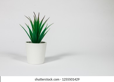 decorative office plant with sharp leaves in white pot on white background