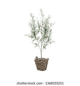 Decorative Oleander tree planted storage basket isolated on white background.  - Shutterstock ID 1368333251