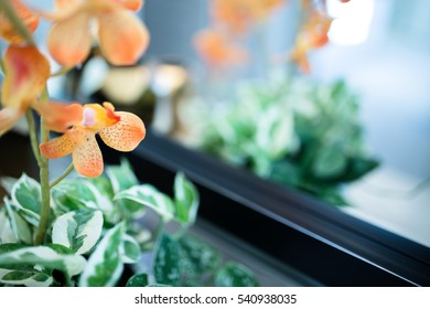 Decorative orange and green house plants