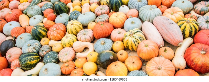 Decorative orange pumpkins on display at the farmers market in Germany. Orange ornamental pumpkins in sunlight. Harvesting and Thanksgivingconcept.