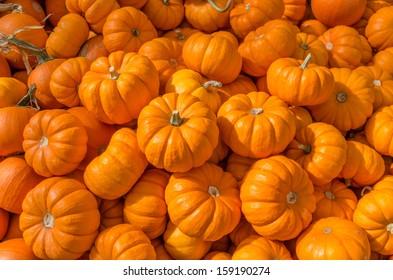 Decorative orange pumpkins on display at the farmers market