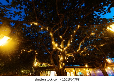 Fairy Lights in Trees Images, Stock Photos & Vectors | Shutterstock