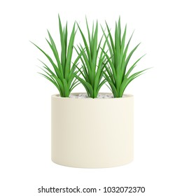 Decorative Palm plant planted white ceramic pot isolated on white background. 3D Rendering, Illustration.