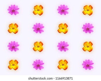 Decorative pattern with pink mallow flower and yellow red flower of wallflower on light blue background
