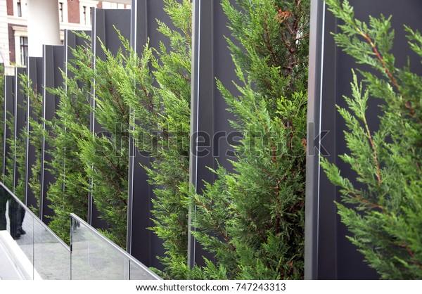 Decorative Pine Trees Landscape Design Stock Photo Edit Now