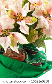 Decorative pink and white colored silk flower poinsettia flower. Focus on the flowers in the foreground.