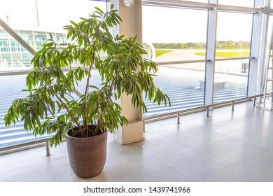 Decorative plant trees in pots at the modern airport or office building.