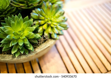 Decorative Plants for Backyard