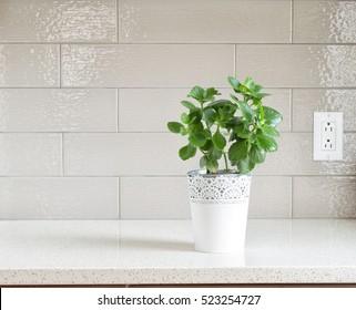 Decorative plants  on granite counter-top