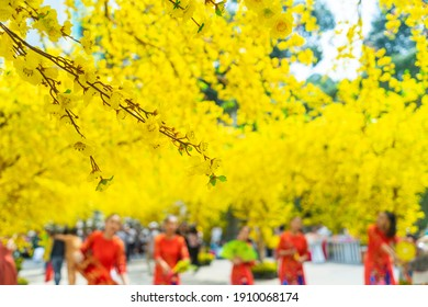 Decorative plastic yellow apricot flowers in Tet holiday in Vietnam. People wear Vietnam tradition ao dai to take pictures in blurred background. Background and festival concept. Selective focus.