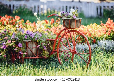 Decorative Retro Vintage Model Old Bicycle Equipped Basket Flowers Garden. Summer Flower Bed With Petunias.