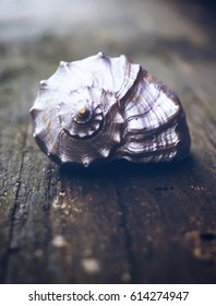 Decorative sea shell on wooden table